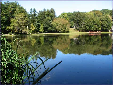 scenery_park_cedar1